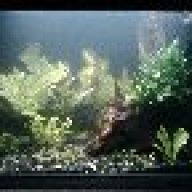 Aquariumboy