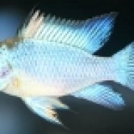 Fischsupporter